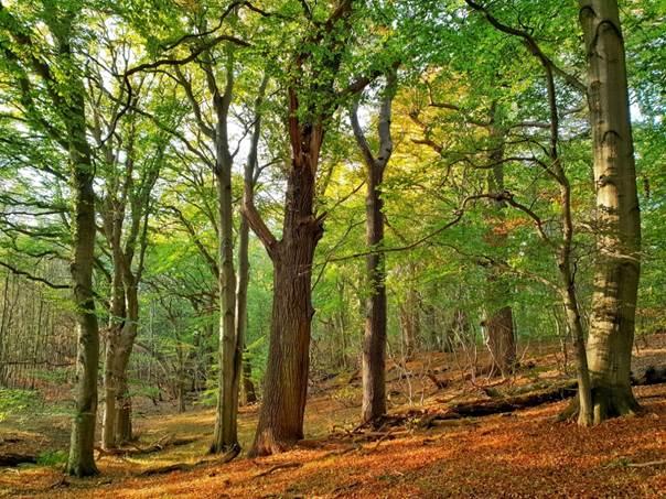 DAS GEHEIME LEBEN DER BÄUME: 5 erstaunliche Fakten über Bäume