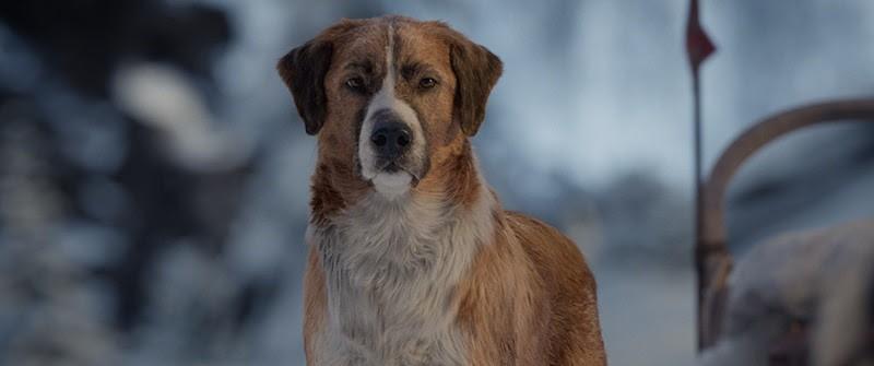 Buck ist der Star der Neuinterpretation des Jack London Klassikers.