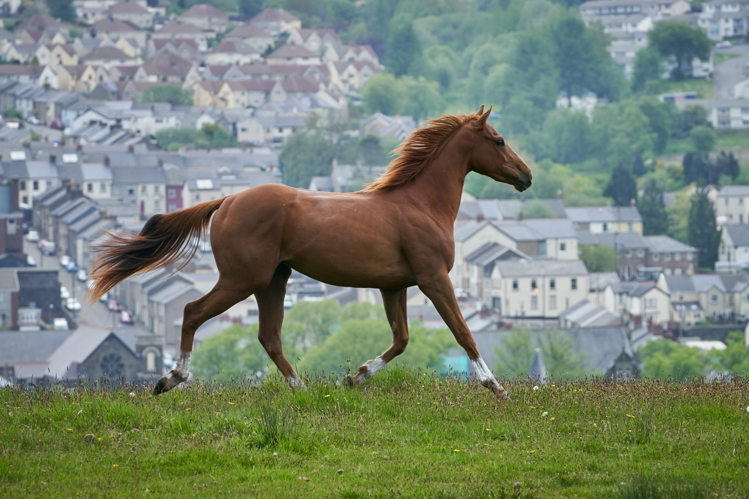 Dream Horse Filmszene - Ein Pferd auf einem Hügel vor der Kulisse einer englischen Kleinstadt