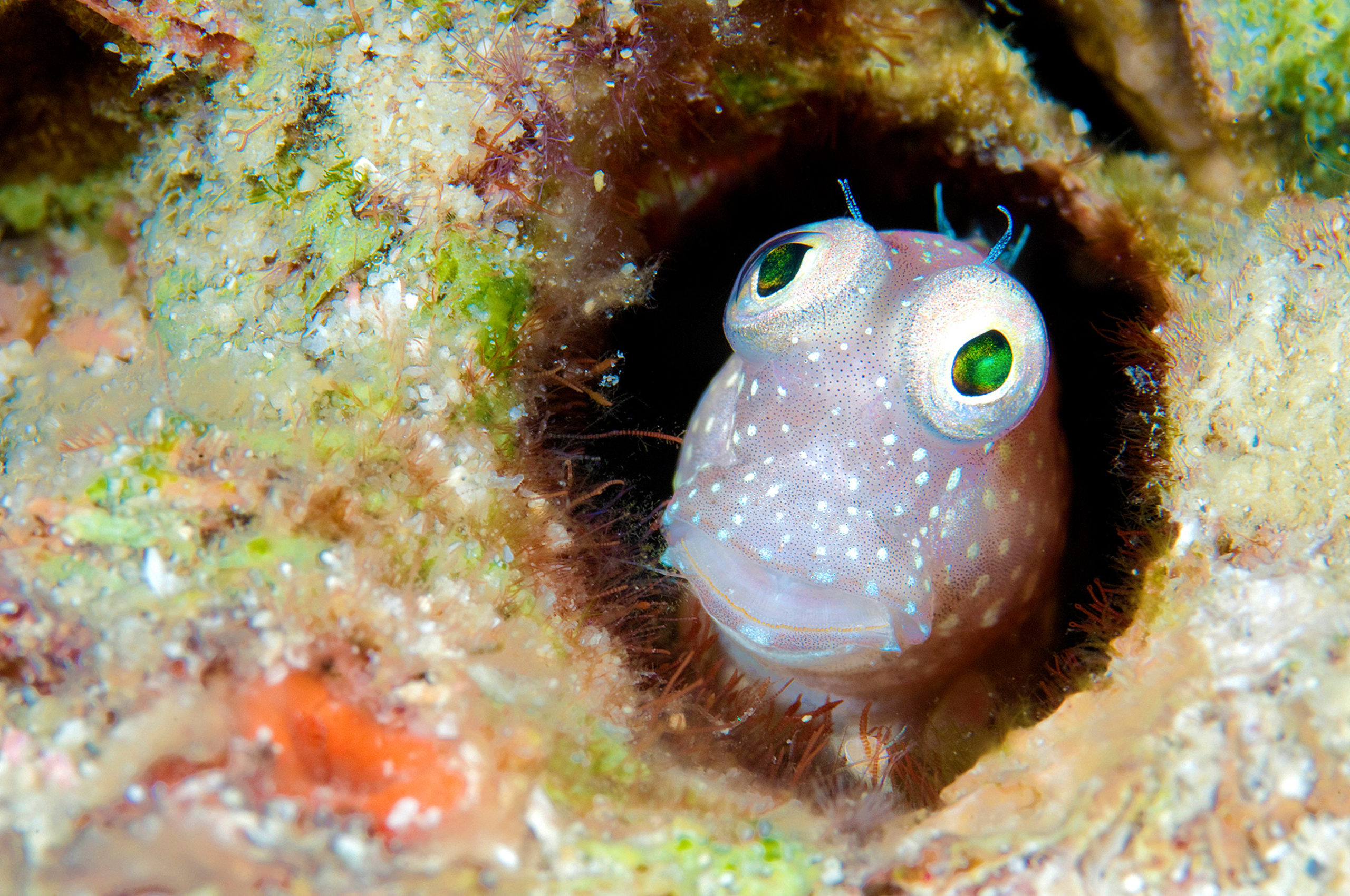 Goby, Papua New Guinea -  WONDER OF THE SEA 3D