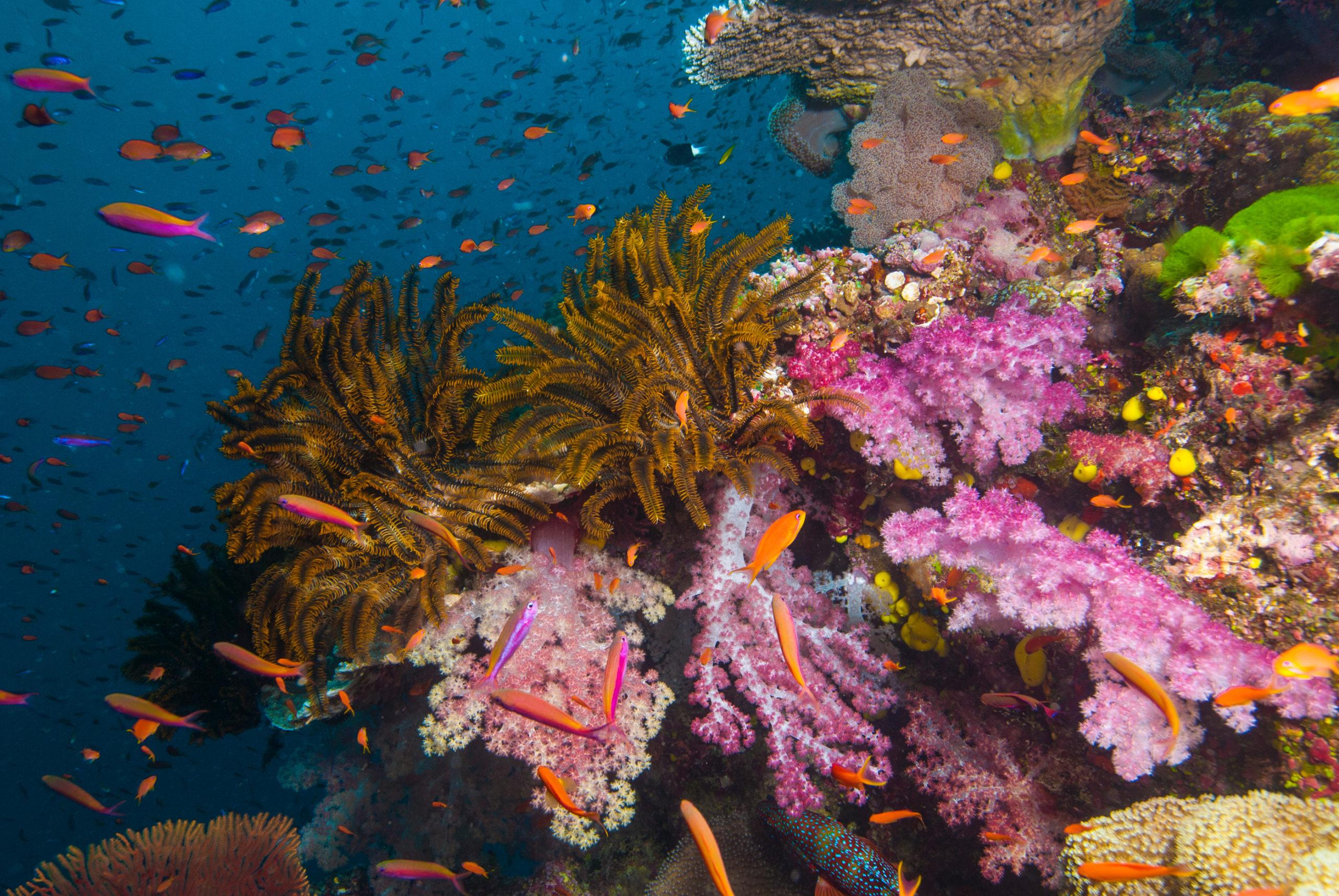 Fidschi Unterwasserwelt