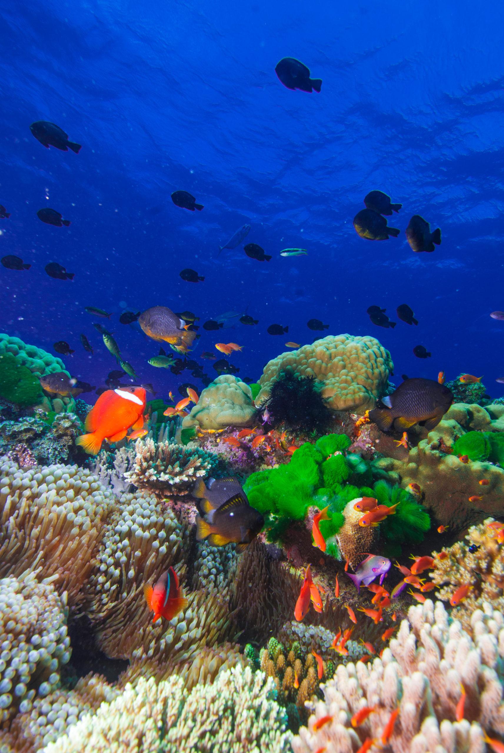 Unterwasserwelt Fidschi